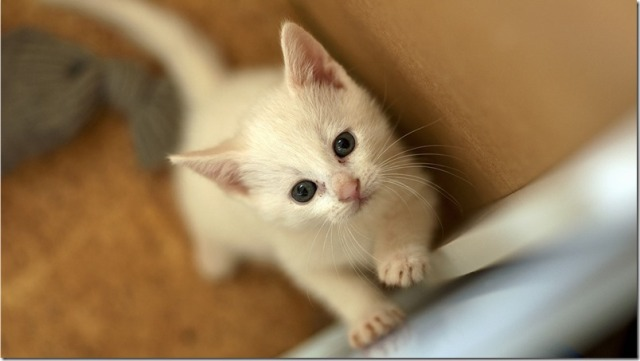 curiosidades-madrid-gatos